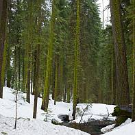 San Francisco Landscape Photography Paul Pardue 20110420_123858_000923 Creek, Maripossa Grove, National Park, Snow, Trees, Yosemite